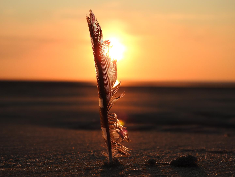 Federn Im Wind