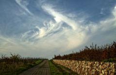 Federwolken im Abendlicht - in den Weinbergen bei Oberwalluf