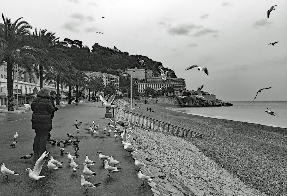 feed the seagulls under the rain