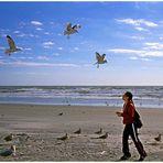 Feeding seaguls