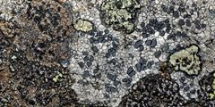 Feine Flechtenkunst von Mutter Natur! * - Les lichens qui donnent une oeuvre d'art!