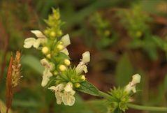 feine kleine Blüten