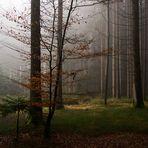 feiner Nebel auf dem Stieg