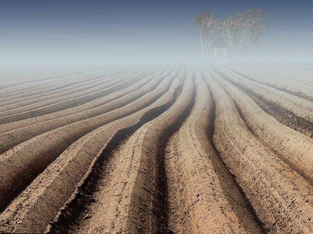 Feld am Morgen von Schneider Hannelore