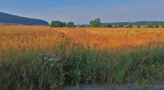 Feld am See, morgens (campo en el lago, por la mañana)