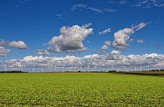 Feld der Windräder