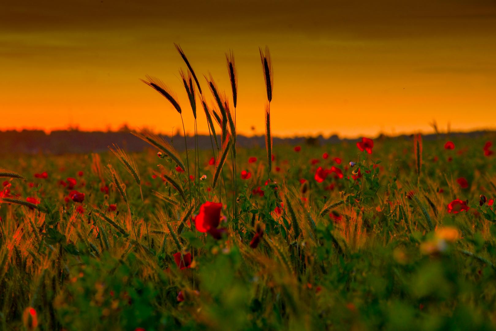 Feld im Abendlicht