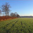Feld im Morgenlicht