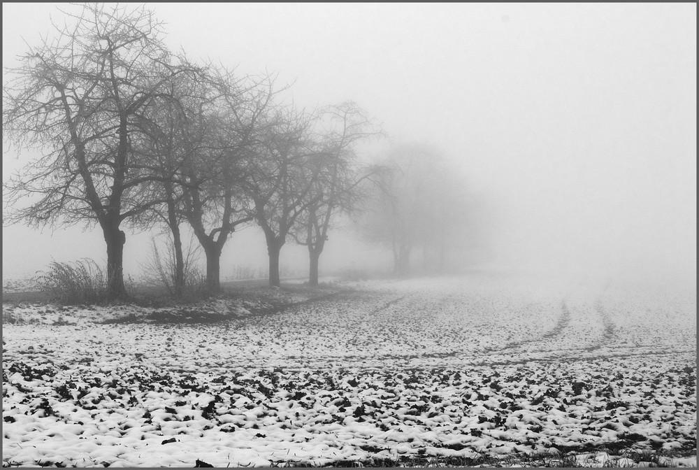 Feld im Nebel