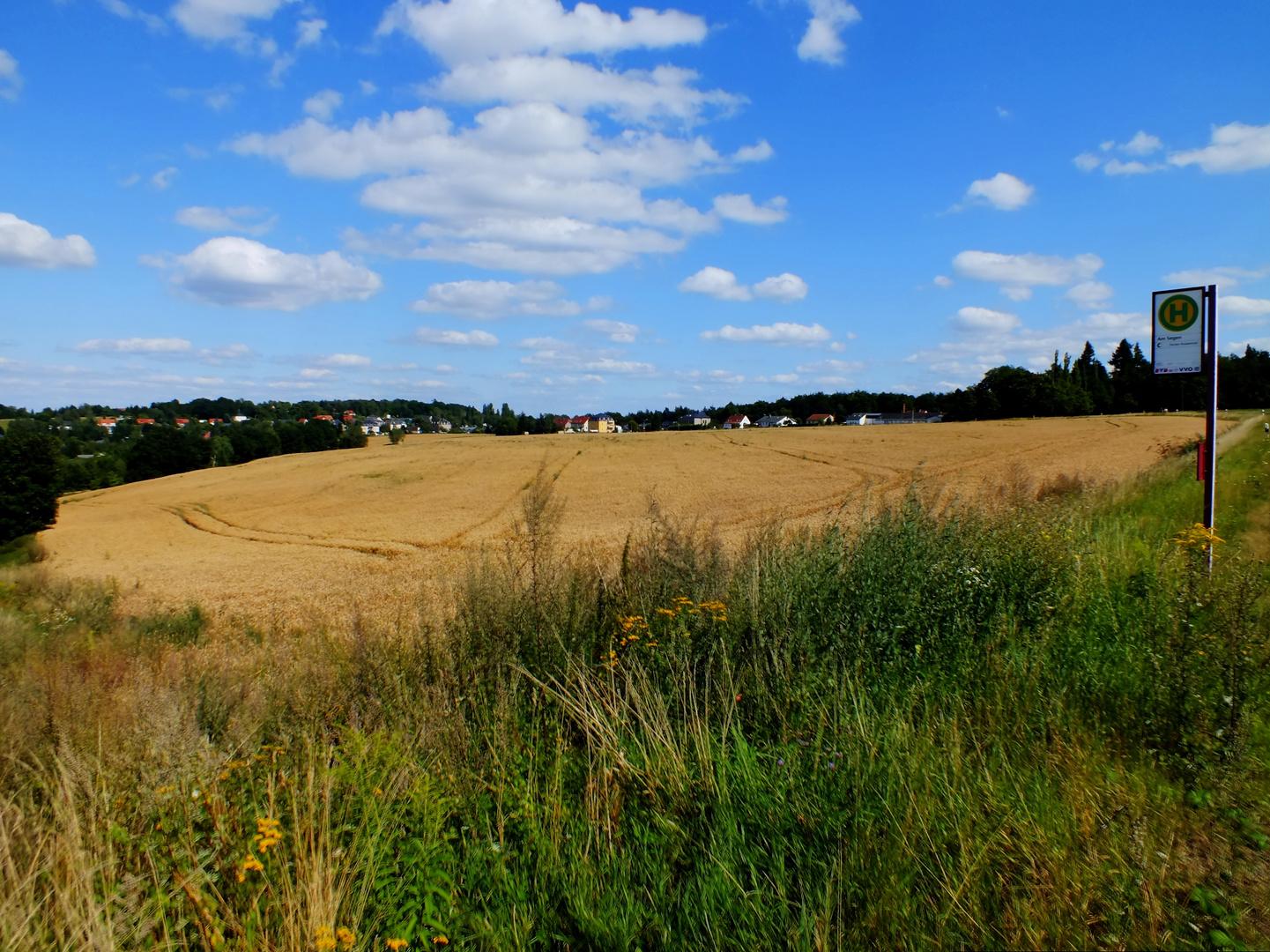 Feld in Freital Sachsen