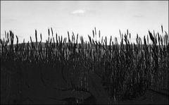 Feld mit kleinen Wolken