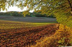 Feldabend im Herbst
