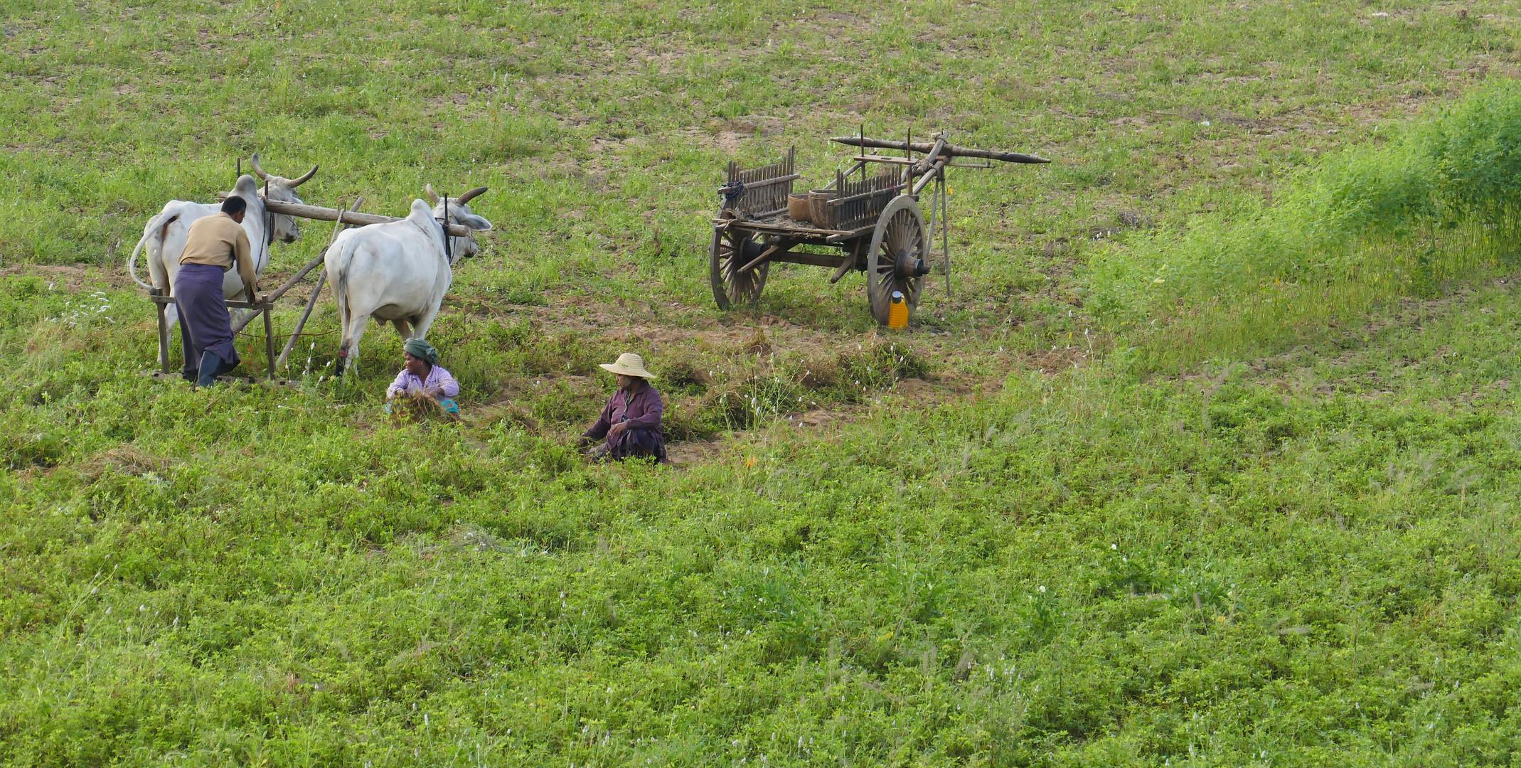 ...Feldarbeit aus der Luft gesehen...