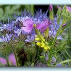 Feldblumen die ich nicht alle kenne