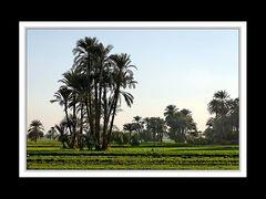 Felder am Rand von Luxor