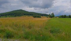 Felder am See (campos en el lago)