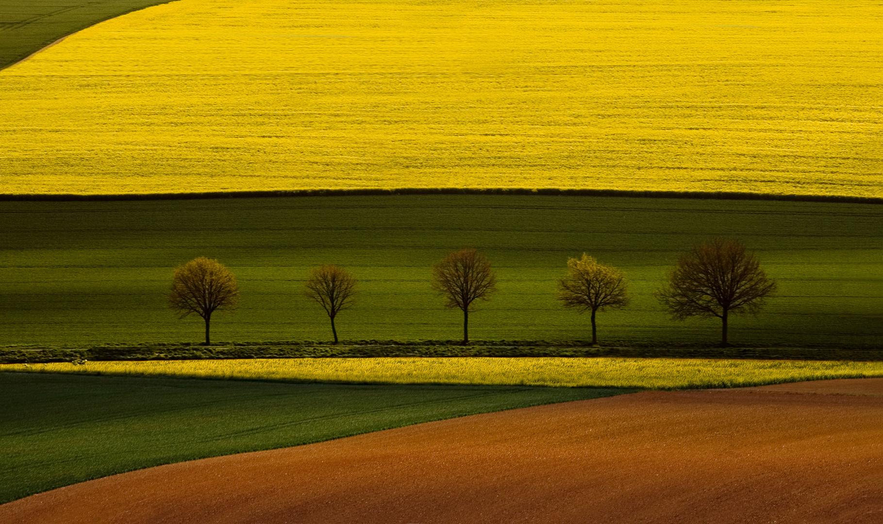 Felder der Voreifel