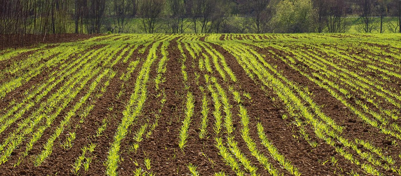 Felder im April