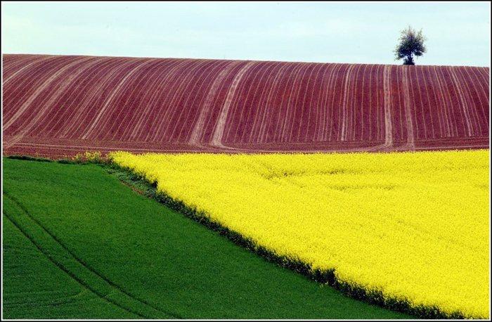 Felder in Farbe