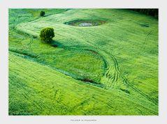 Felder In Masuren
