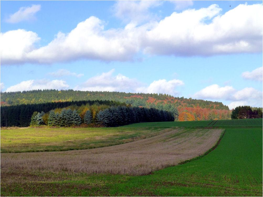 Felder und Wälder
