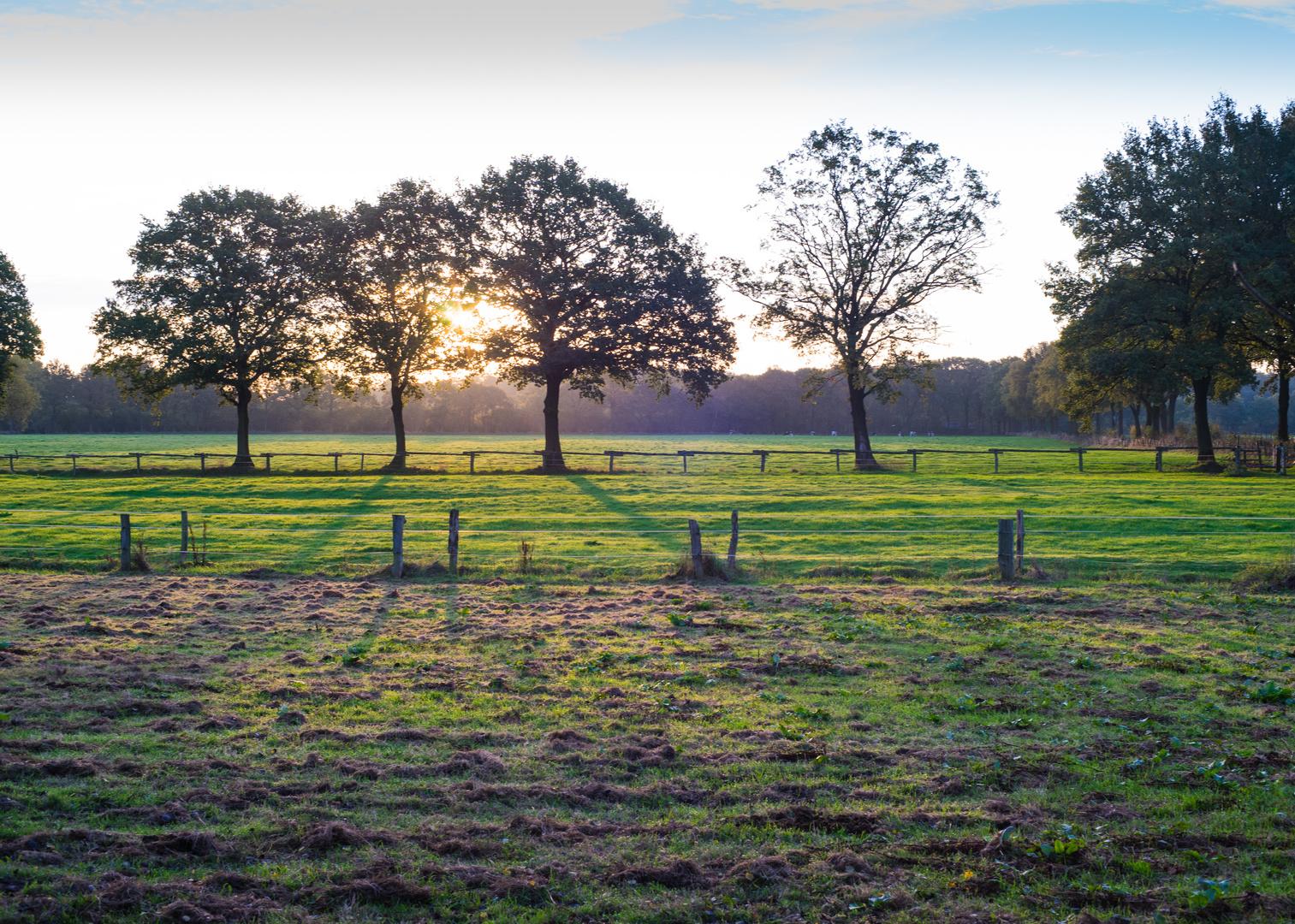 Felder vor dem Wald Klövensteen