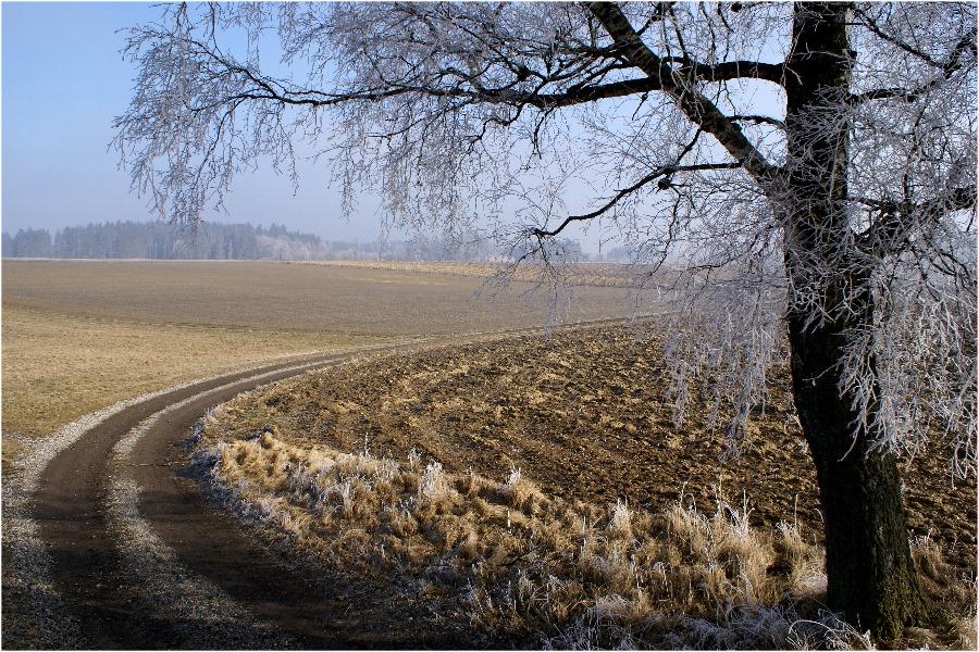 Feldweg am Morgen