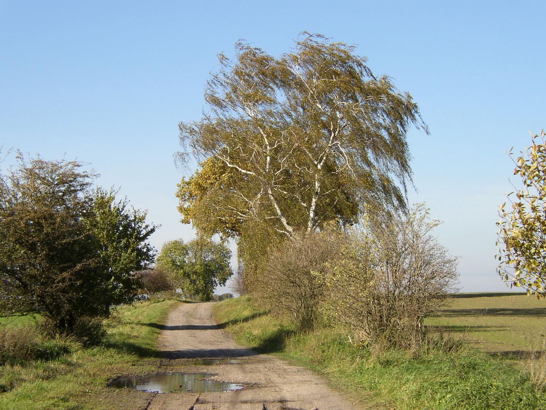 Feldweg im Herbstwind