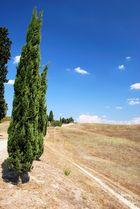 Feldweg mit Zypressen bei San Gimigniano, Toscana, Italien