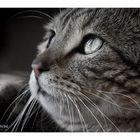 Feline (II)