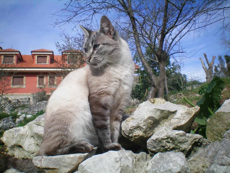 felino1