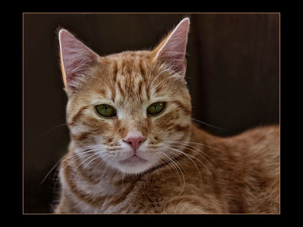 Felix Foto & Bild | tiere, haustiere, katzen Bilder auf