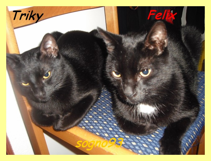 Felix e Triky