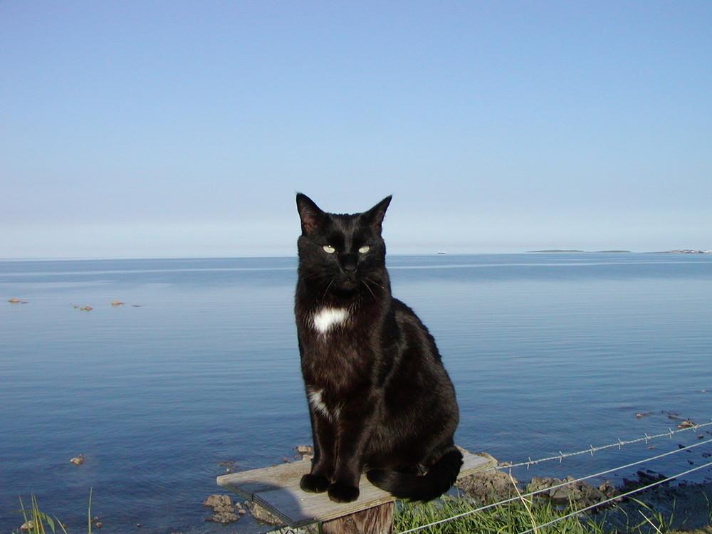 Felix enjoying the sun at the end of the garden.