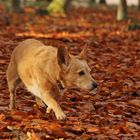 Felix im Herbstlaub