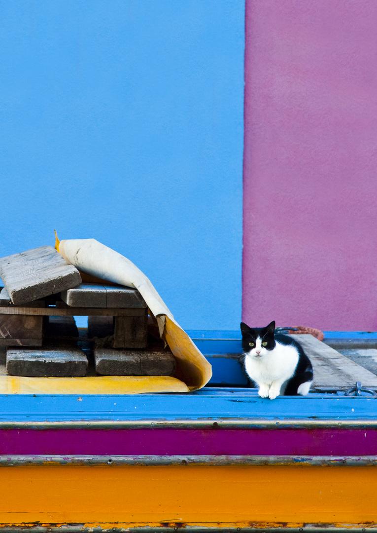 Felix the cat...a Burano