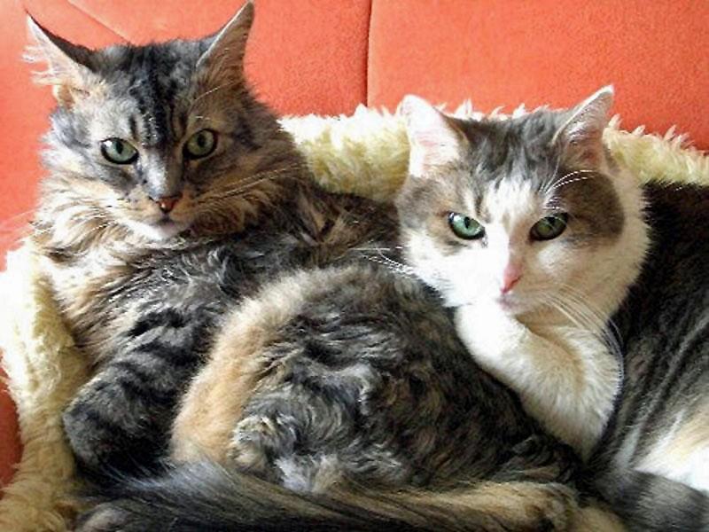 Felix und Willi