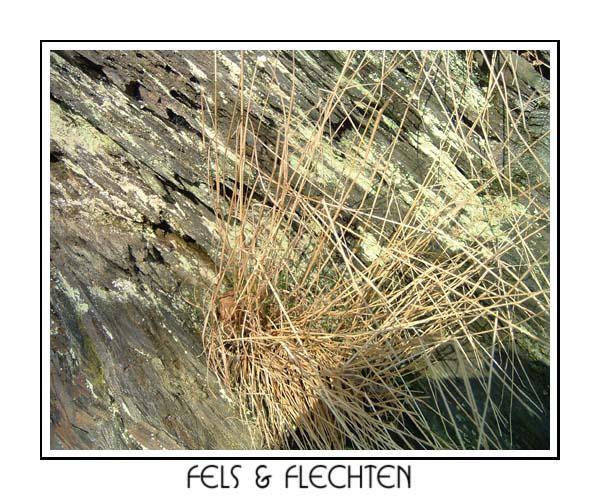 Fels & Flechten