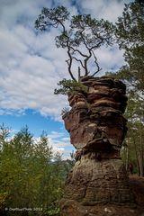 Fels mit Baumwuchs