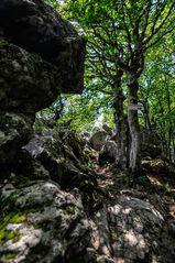 Fels und Wald