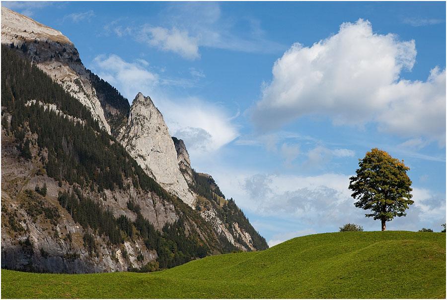 Fels - Wolke - Baum