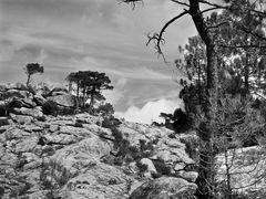 Felsen der Maccia