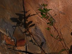 Felsen ( Ölschiefer )