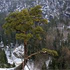 Felsenbühne im Winter