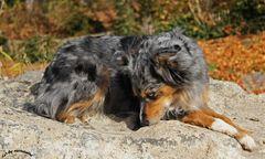 ' Felsenhund '