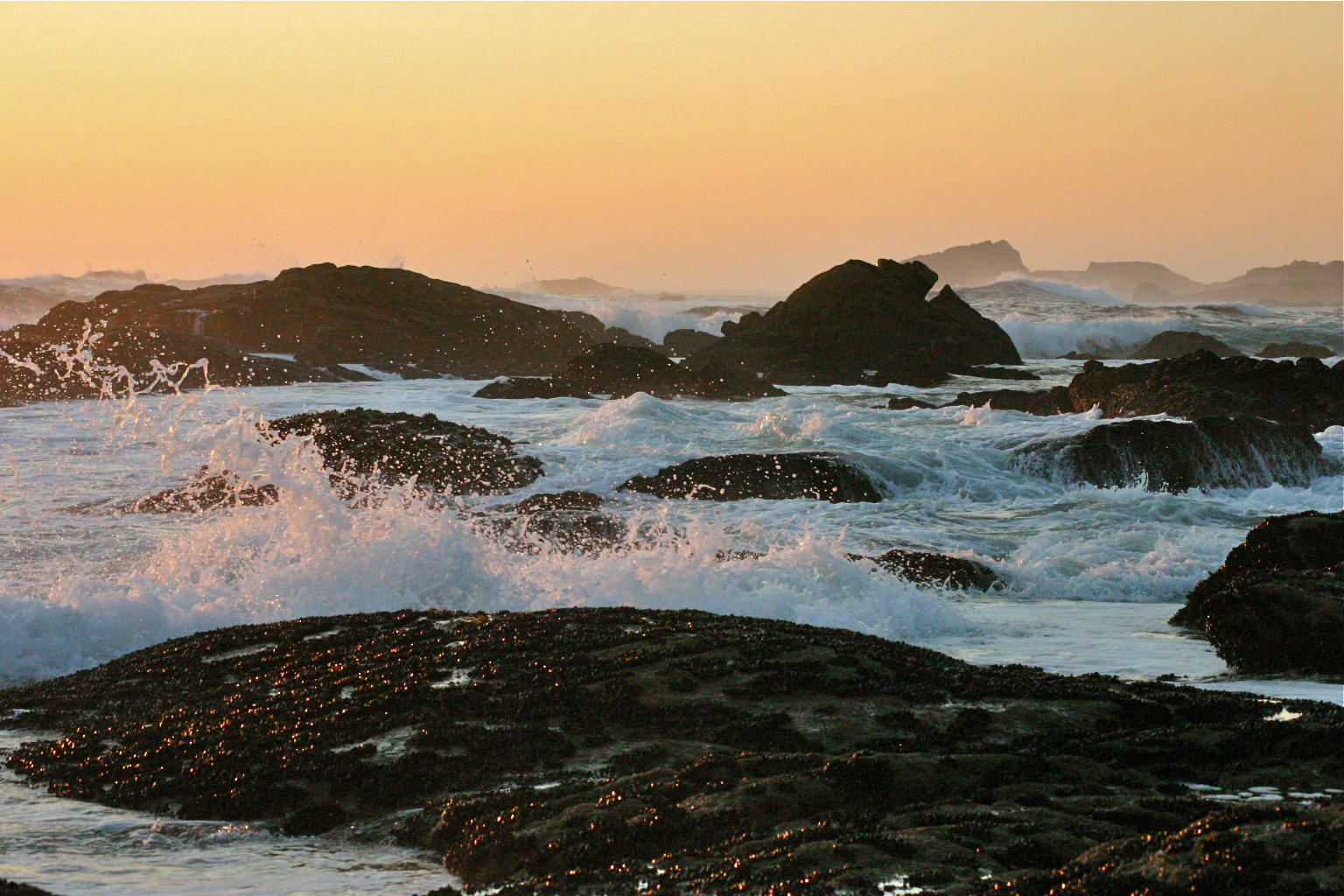 Felsenküste mit Muscheln