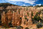 Felstürme im Bryce Canyon N.P.