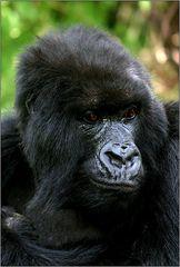 female of Amahoro group 01