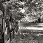 Fence, Trees, and Shadows - A Meadowlark Gardens Springtime Impression