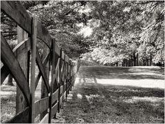 Fence, Trees, and Shadows - A Meadowlark Gardens Springtime Impression